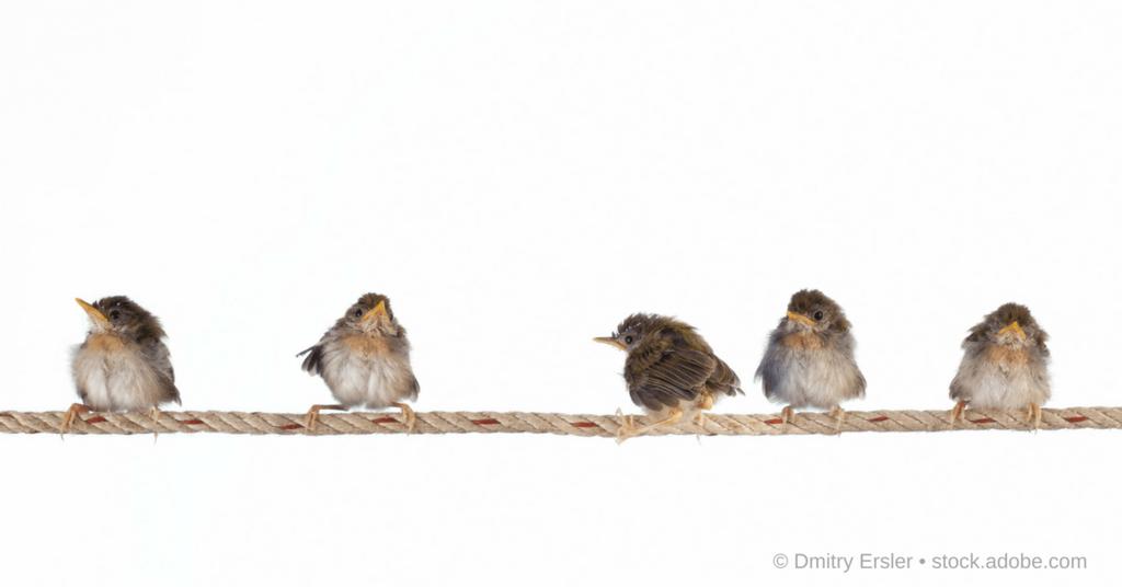 Junge Spatzen in einer Reihe als Illustration zur Twitter-Blogparade