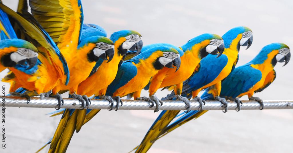 Blogparaden können ein gutes Marketing-Instrument sein - Papageien-Parade