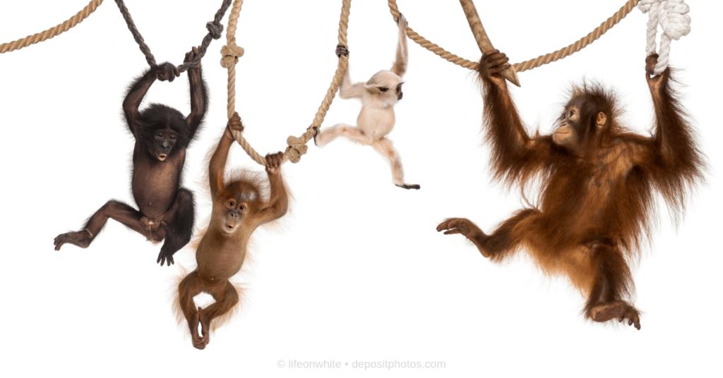 Affenbande als Illustration zu Die Angst vor dem Verkaufen