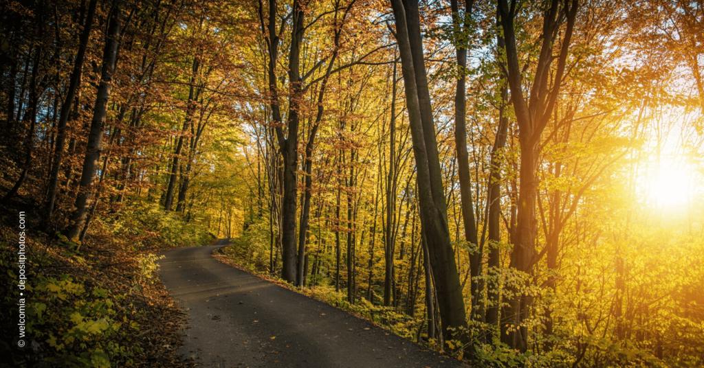 Den Wald vor Bäumen nicht sehen - Anleitung zum Finden von Medien